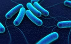 Bakteriebekampning